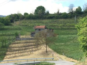 Vineyard with farmhouse to restore