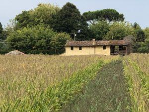 Magic Cottage close to Viareggio